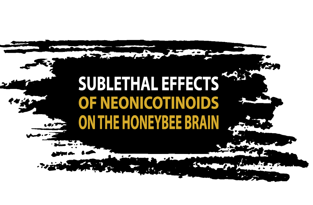 sublethal effects of neonicotinoids on the honeybee brain